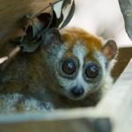 cu chi wildlife rescue station excursion