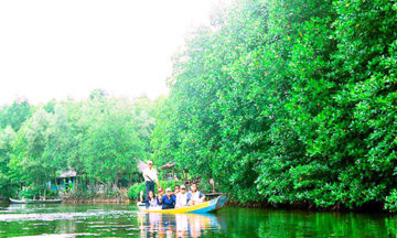 can gio mangrove forest day tour